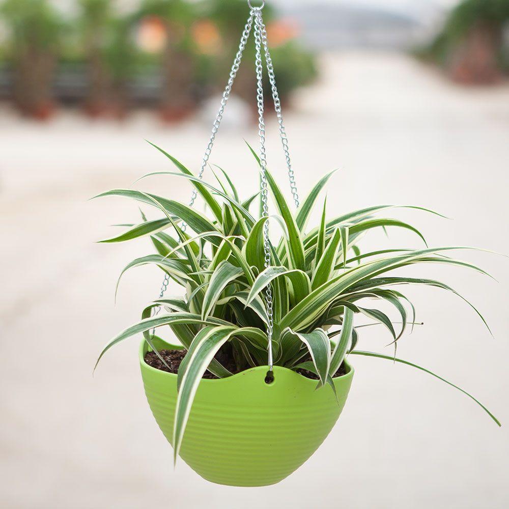 8种适合在办公室摆放的绿色植物